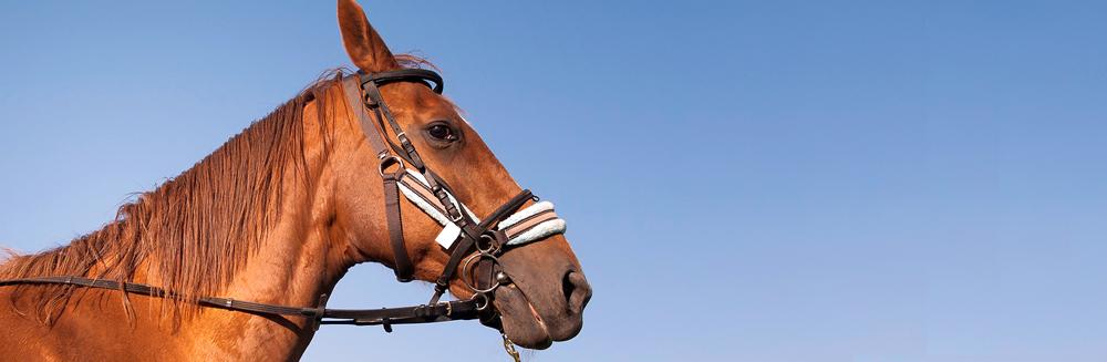 Curso de Hipoterapia/Equitação Terapêutica (nível 1)